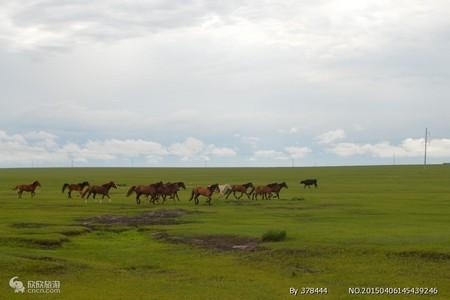 呼和浩特出发探寻狼图腾旅游线路_乌拉盖草原-石林-达里湖5日