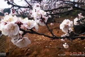 沈阳到大连赏樱花两日游_沈阳到大连看樱花_2017大连樱花节