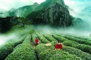天津到福建旅游景点介绍_福州_武夷山_厦门双飞五日游