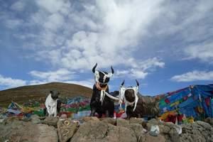 郑州到西藏14日【纯玩挂三】拉萨|纳木错|林芝|日喀则|珠峰