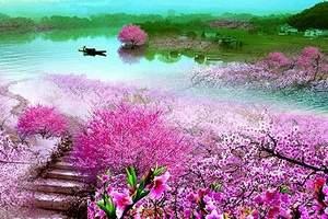 北京到平谷赏百亩桃花品农家饭采摘一日游