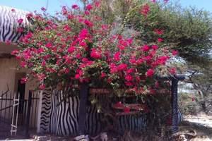 肯尼亚旅游多少钱_行摄绚美|马塞马拉国家公园猎奇之旅超值8日