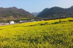 清明节天水周边游:广元油菜花、昭化古城、青木川2日游
