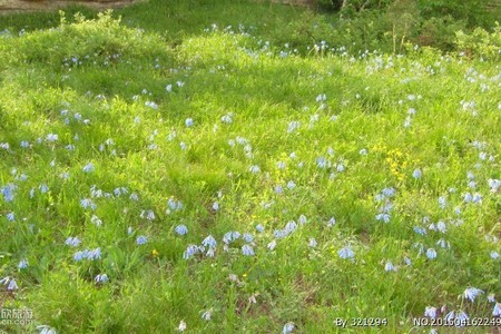 呼和浩特周边美丽的草原旅游_辉腾锡勒草原1日旅游行程价格