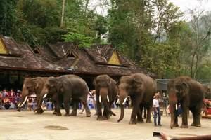 云南到西双版纳旅游:野象谷、森林公园、大佛寺4日尊享游