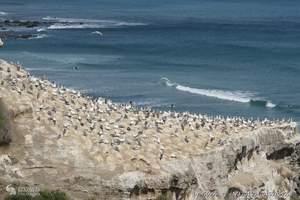 新西兰旅游、深圳出发新西兰南北岛全景8天100%纯净之旅