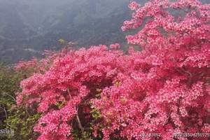 云南昆明、大理、丽江、西双版纳、贵阳黄果树、凤凰专列12日游