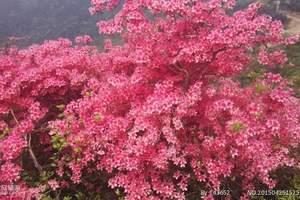 泉州附近有哪些看花的地方‖漳平永福浪漫赏樱花一日游
