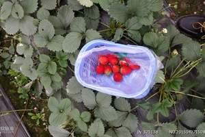 石家庄周边哪里可以采摘|摘草莓、柏林禅寺、君乐宝牧场一日游
