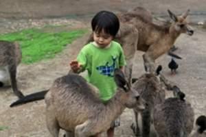天津到八达岭长城_八达岭长城_野生动物园一日游