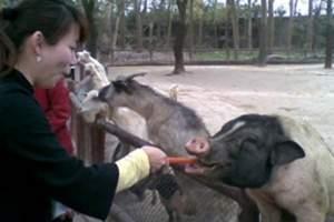 天津到北京旅游_北京野生动物园一日游