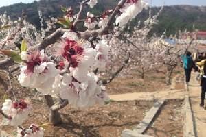 【探险之旅】芒砀山汉墓群+杏林花海一日游