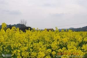 广安出发、潼南万亩油菜花基地、双江古镇一日游