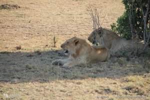 昆明出发到肯尼亚10天观看野生动物特色之旅|安排二晚马赛马拉