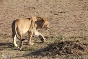 肯尼亚、坦桑尼亚16天探秘东非之旅【动物大迁徙 博高利亚)