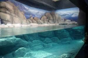西安曲江海洋世界+海洋馆+极地馆纯玩一日游