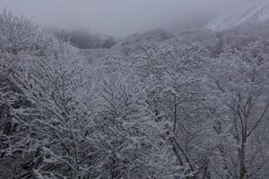 北京出发到阿尔山冰雪跨年专列、观雾凇、品冬捕专列5日游