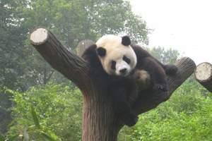 宜宾出发【上里古镇、碧峰峡、熊猫园、野生动物园二日游】