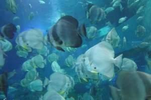 威海神游海洋馆景区门票自驾游一日游 代订优惠门票