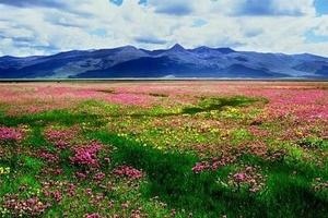 6月7月成都去米亚罗红原若尔盖俄木塘花海 花湖 九曲3日游