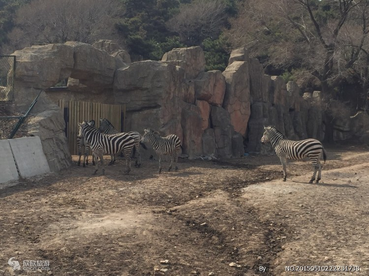 棋盘山动物园一日游|团购门票多钱|在哪可以报名