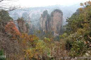 张家界森林公园+玻璃栈道+天门山+芙蓉镇+猛洞河+凤凰五日游