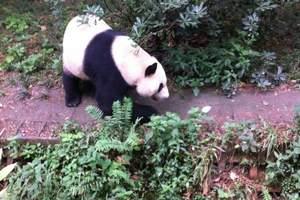 三星堆+熊猫基地汽车一日游-中国国旅