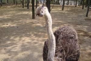 北方森林动物园一日游_哈尔滨动物园门票多少钱_动物园在哪儿