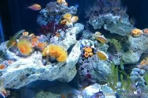 青岛海底世界门票团购(大通票)、海底世界门票价格