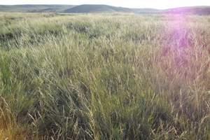 鄂尔多斯出发希拉穆仁草原一日游