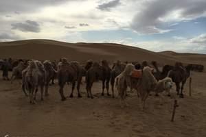鄂尔多斯、库布其沙漠四日游/内蒙古、库布齐沙漠、康巴什四日游