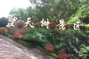 西双版纳野象谷+勐伦植物园+原始森林公园+望天树5天4晚纯玩
