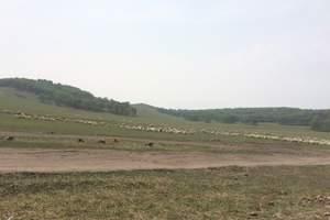 从泰安出发到乌兰布统大草原、塞罕坝、根河湿地纯玩高铁5日