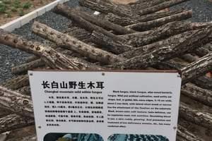 北京到吉林魔界风景区长白山西北坡连游镜泊湖双卧6日
