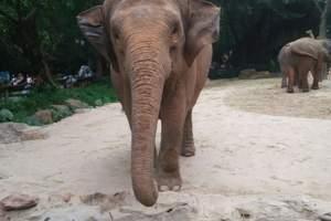 【惠州到广州长隆】野生动物园1日游 逢周六出发