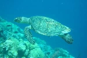 帕劳旅游 帕劳自由行套餐 机票+酒店  幸福海岛