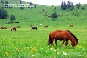 坝上草原几月份去好 坝上草原怎么去 新乡到承德5日游多少钱