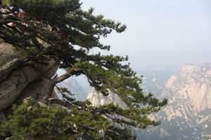 青岛到西安全景八日游 西安景点西安小吃华山在哪 红色旅游线路
