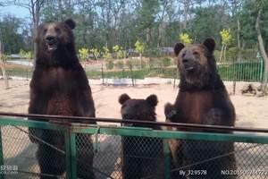 秦皇岛野生动物园一日游/视觉的盛宴丨森林中的野生动物园