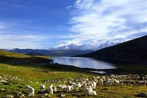 新疆161家旅行社联手抵制低价