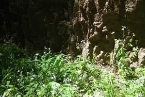 保定到千佛山森林公园+清西陵外景+龙湖一日游