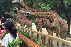 九江到广州长隆水上乐园+野生动物世界+欢乐世界双卧五日游纯玩