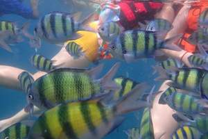 普吉岛6天品质团含邮轮KTV自助餐、浮潜、人妖表演、六岛环游