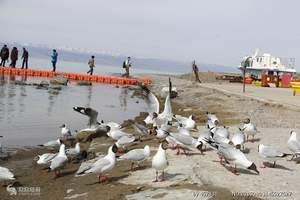 【大美青海】-鸟岛、茶卡盐湖、祁连门源带骑行纯玩3日游