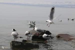 青海湖鸟岛豪华纯玩一日游(观鸟季、鸟的国度)