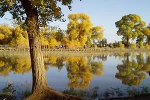 十一中秋:呼和浩特出发去额济纳胡杨林黑水城怪树林双卧4日纯玩