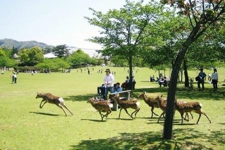 暑假适合带孩子旅游的出国线路_青岛去畅遊日本动感亲子之旅6日