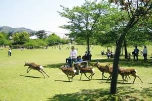 青岛到日本本州大阪、京都、名古屋、东京6天亲子游—趣玩和风