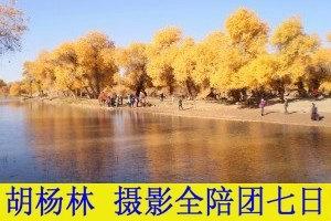 郑州到胡杨林旅游|胡杨林旅游攻略|郑州到胡杨林双卧七天