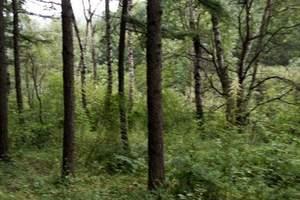 周末旅游:固原六盤山森林公園\紅軍長征紀念亭\火石寨二日游